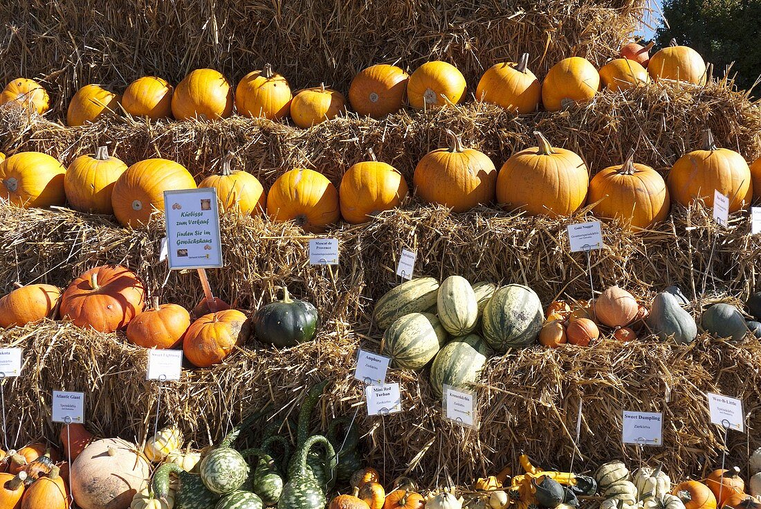 Various squashes on bales of hay