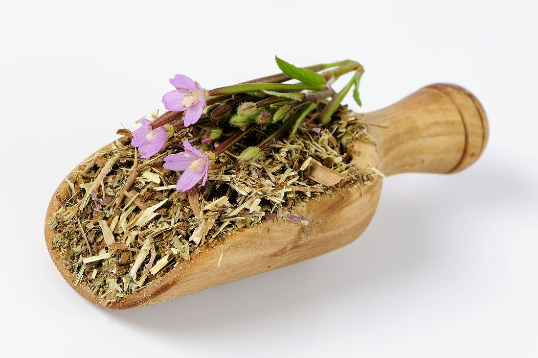 Hairy or Small-flowered willow herb (Epilobium parviflorum)