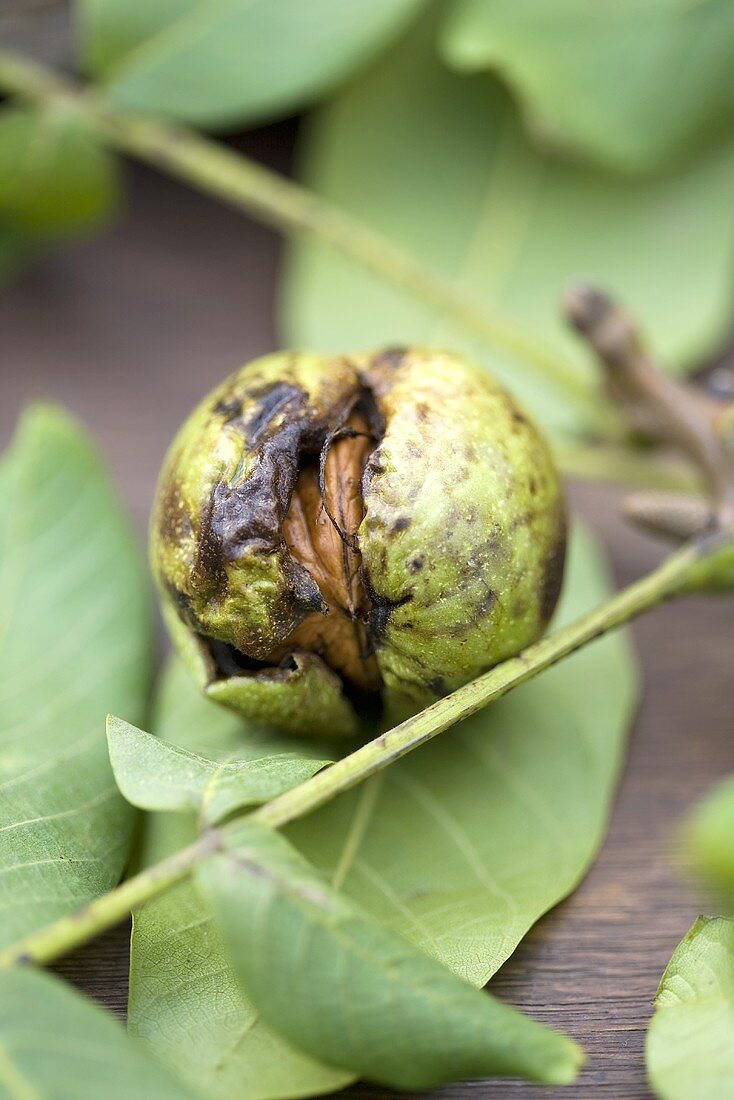 A walnut with a green shell