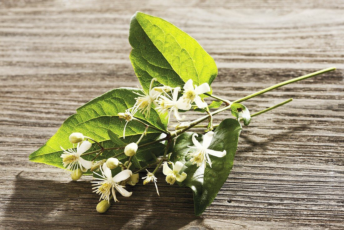 Clematis (Old man's beard), sprig with flowers on wood (homeopathy, Bach Flowers)