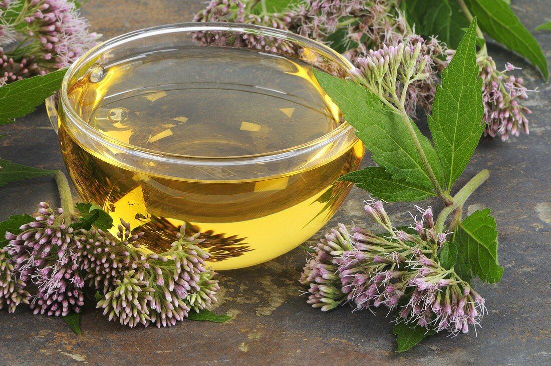 Agrimony tea surrounded by hemp agrimony flowers
