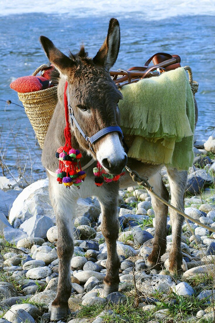 Laden donkey by river