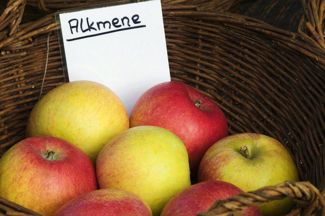 Äpfel der Sorte 'Alkmene'