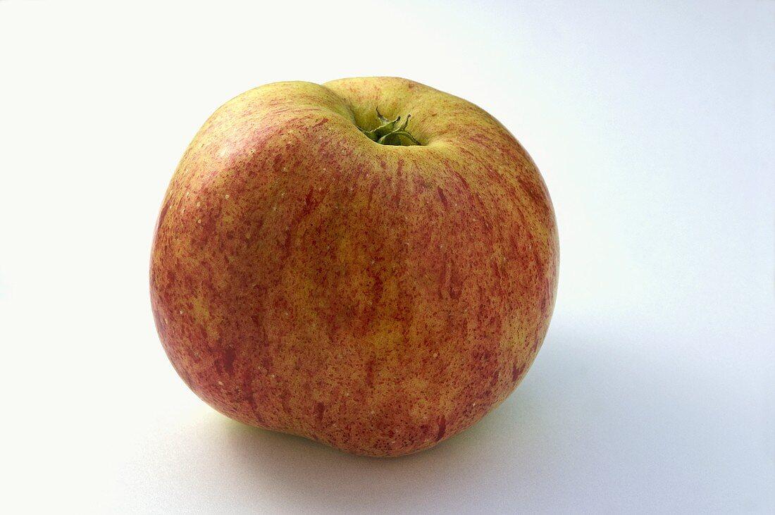 A 'Belomer Falscher Grafensteiner' apple