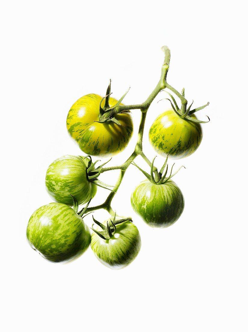 Organic tomatoes (variety Green Zebra)