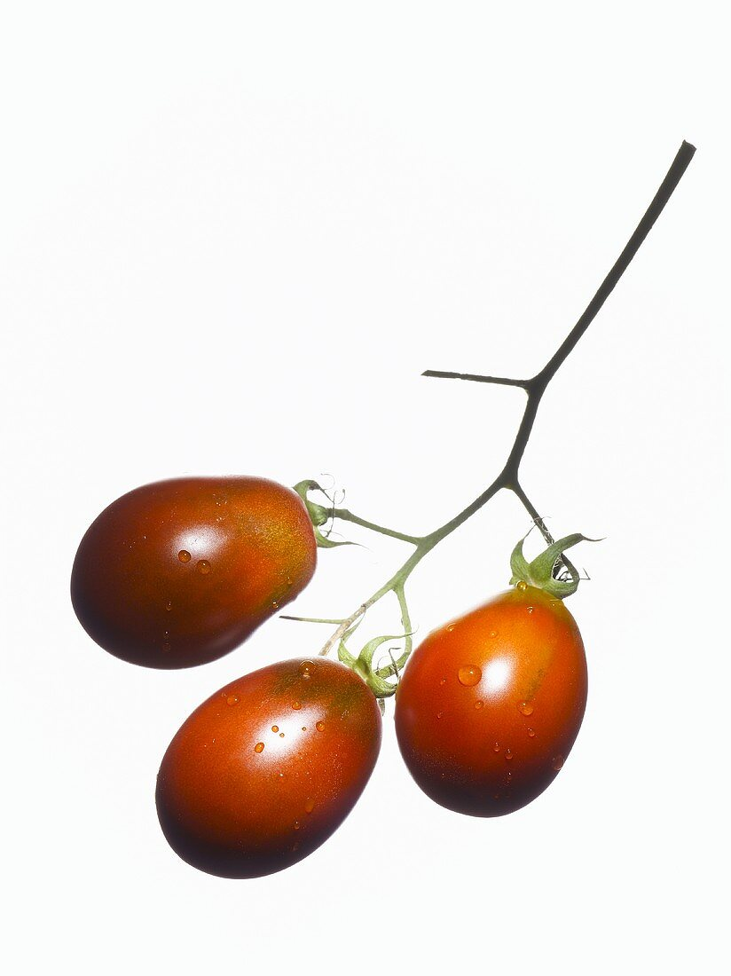Organic tomatoes (variety Black Plum) with drops of water
