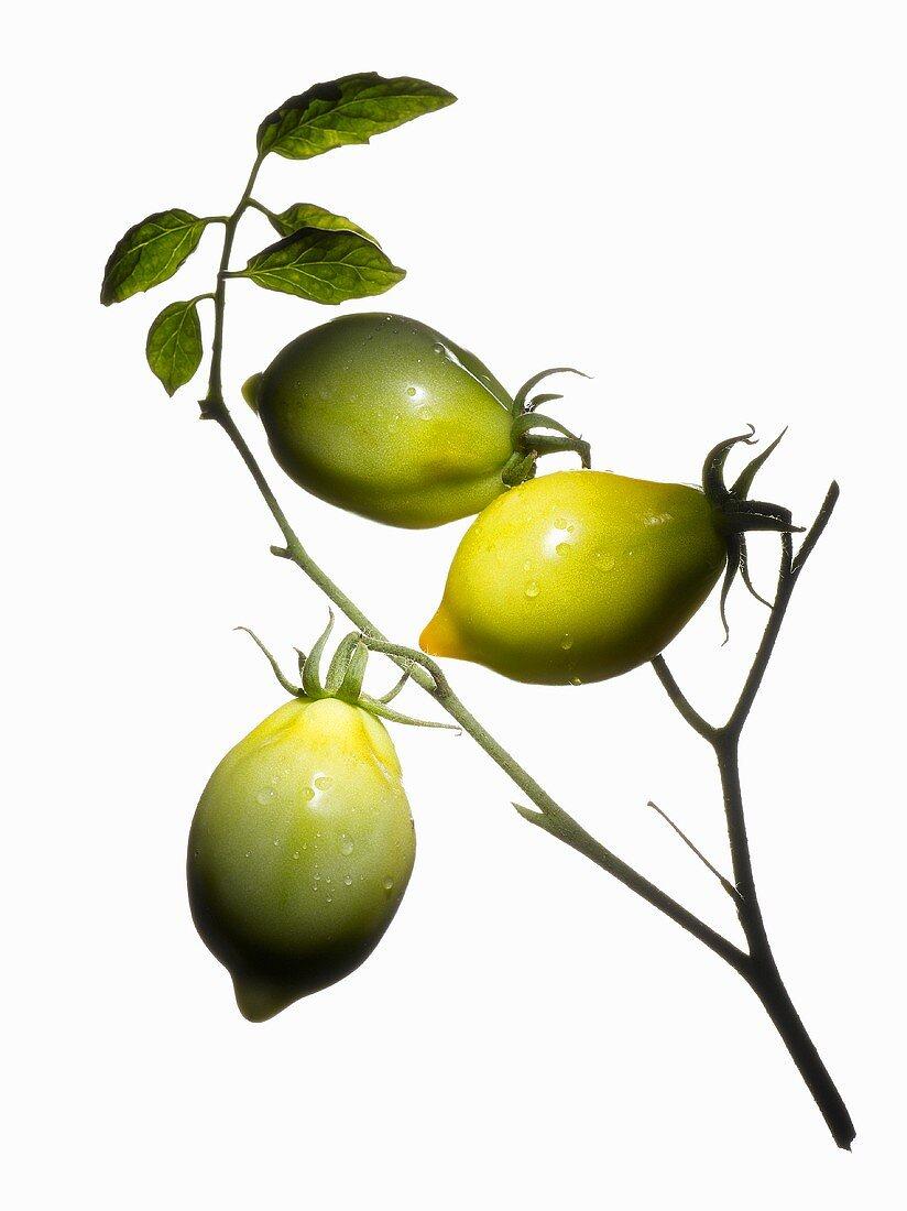 Organic tomatoes (variety Teton de Venus)