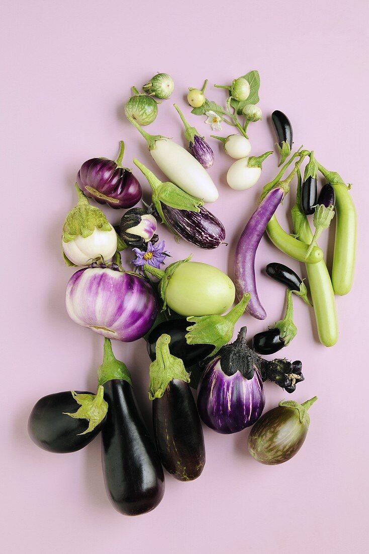 Various types of aubergines