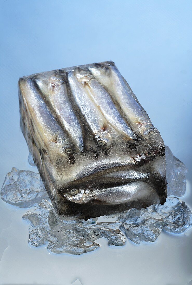 Anchovies in a block of ice
