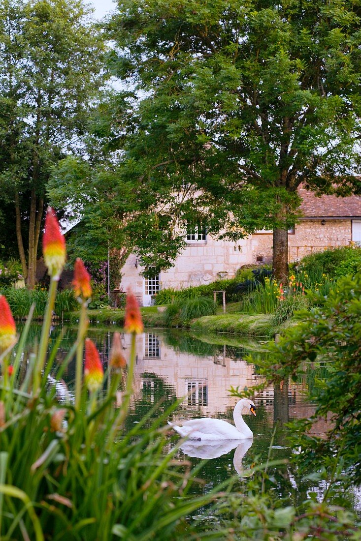 Swan in garden pond with romantic country house in background