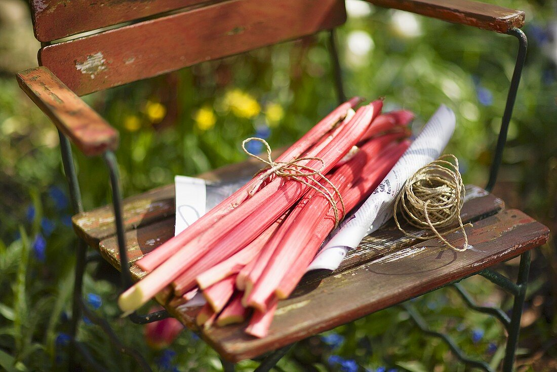 Sticks of rhubarb tied together on a garden chair