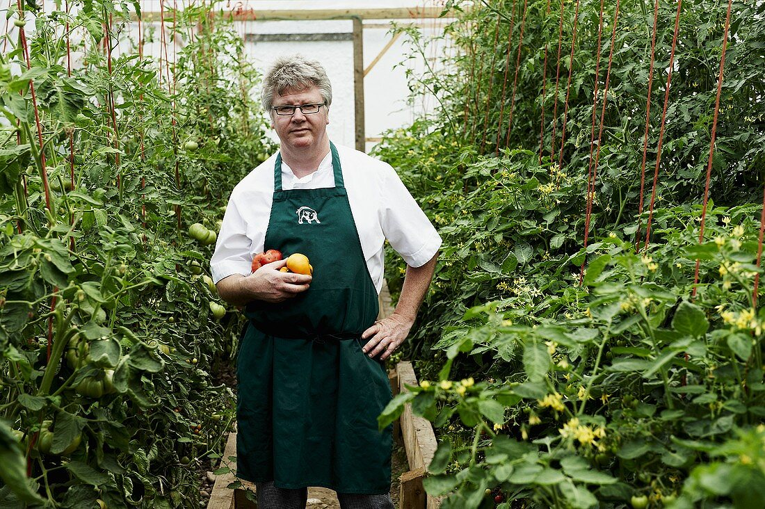A chef in a greenhouse of tomatoes