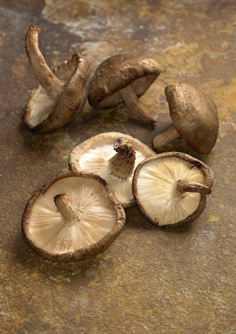 Six fresh shiitake mushrooms