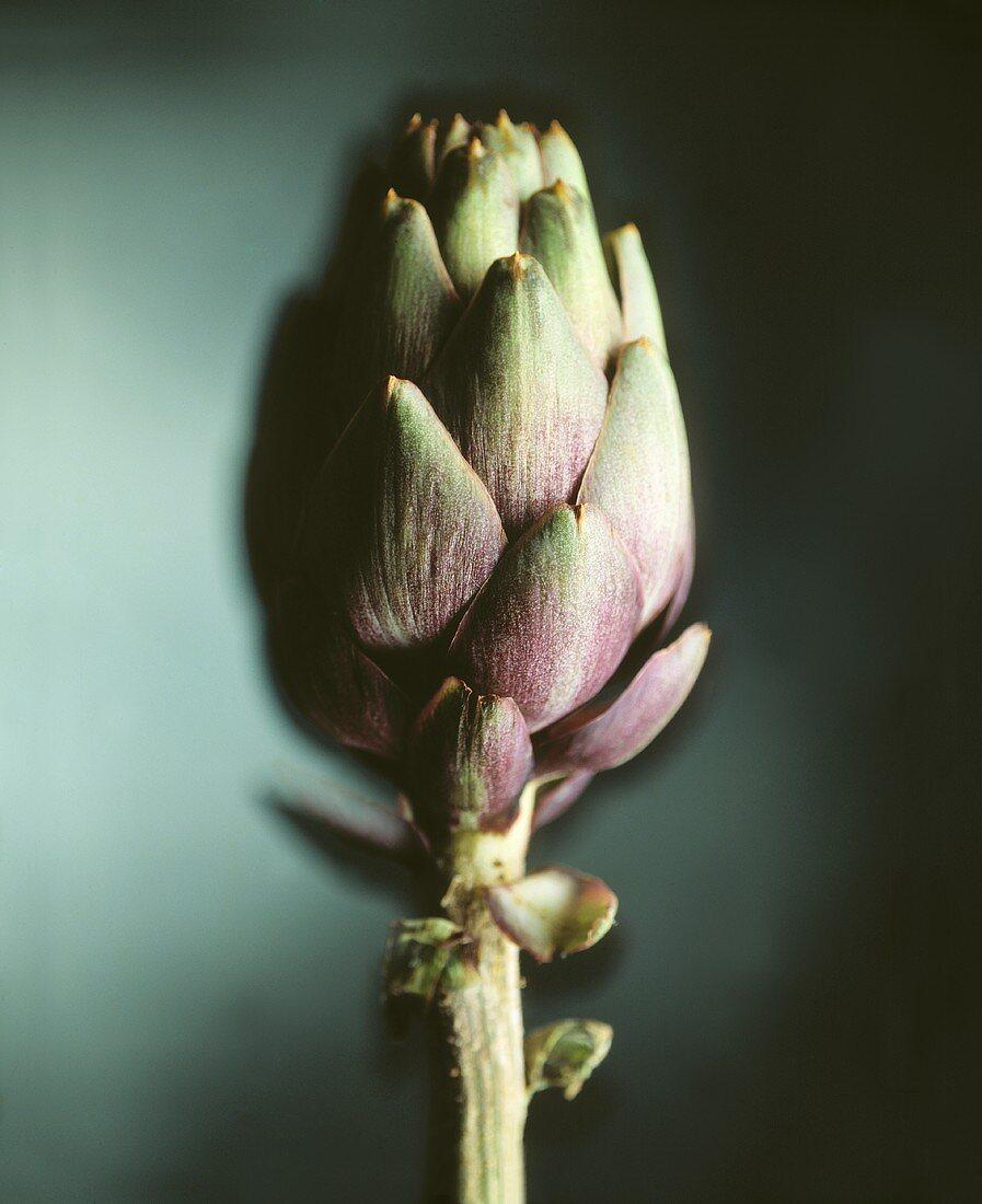 Baby artichoke