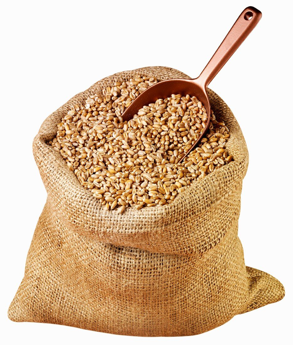 Wheat in jute sack with scoop