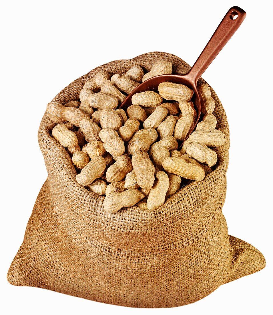 Peanuts in jute sack with scoop