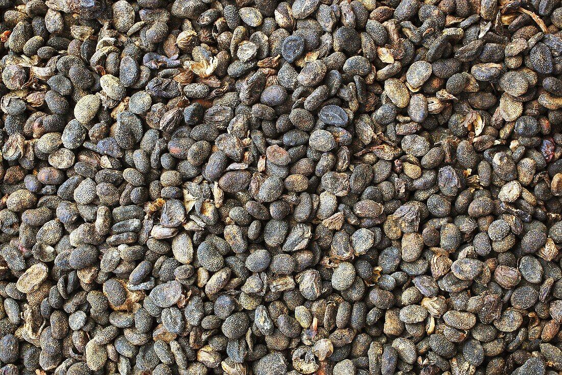 Psoralea seeds (Psoralea corylifolia)