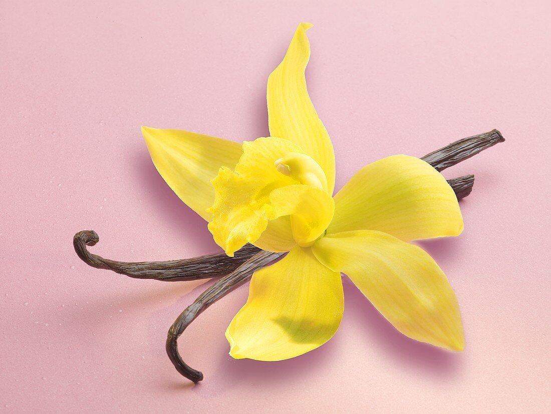 Vanilla pods and yellow flower
