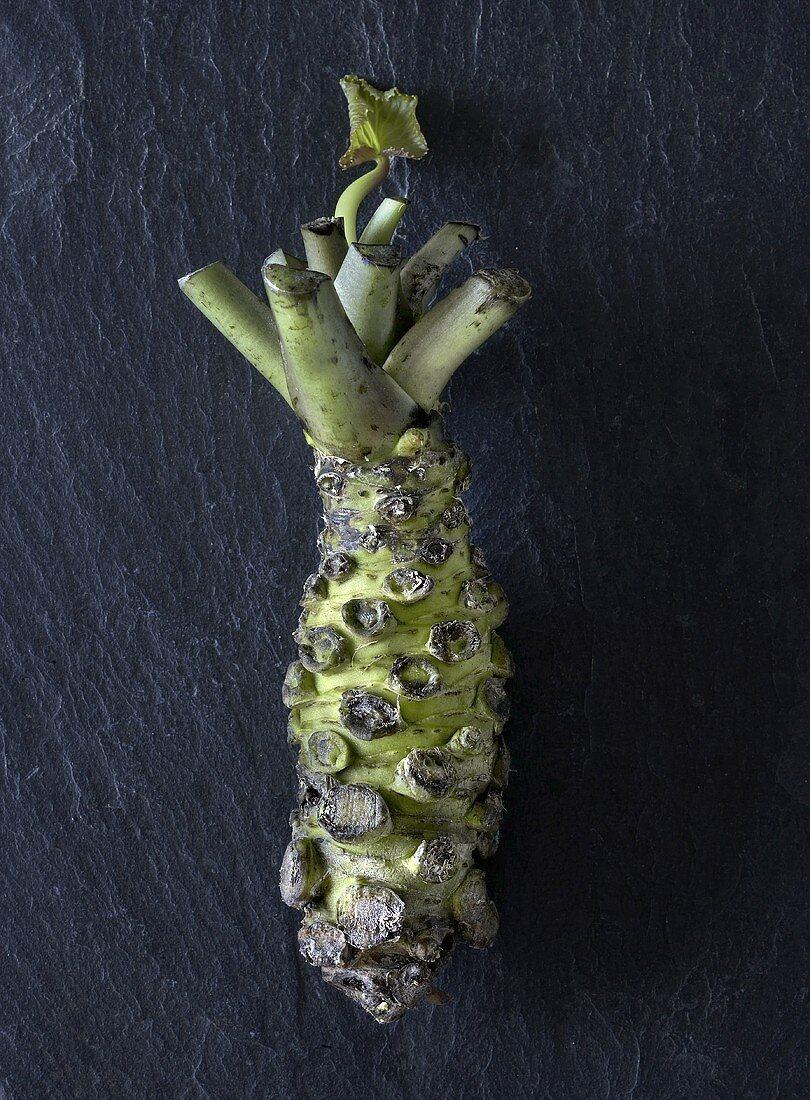Japanese horseradish (wasabi)