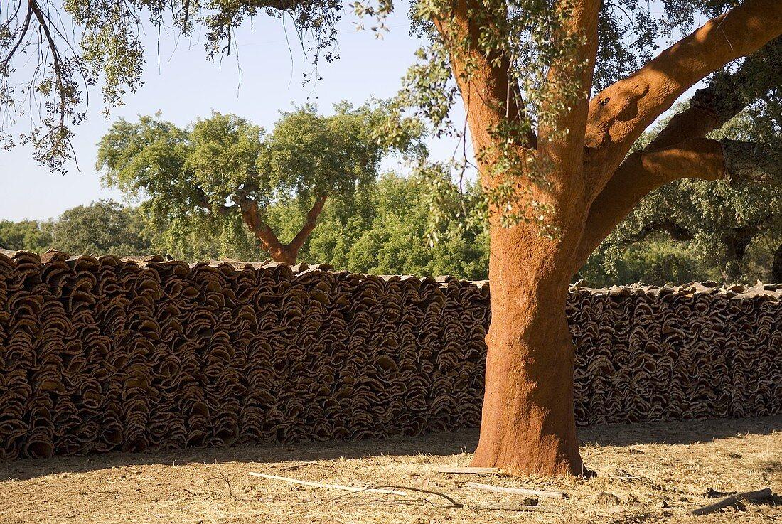 Stacked cork oak bark