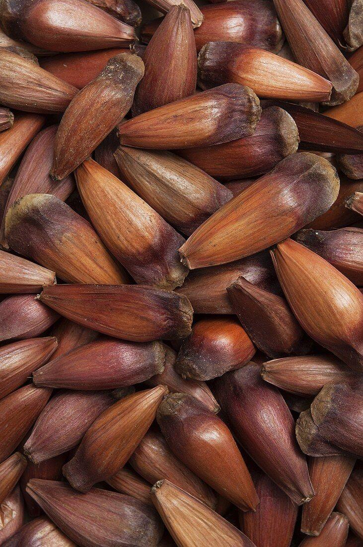 Araucaria nuts, Portugal