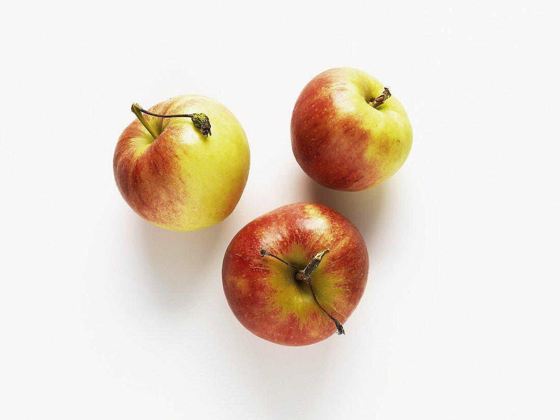 Three apples (variety: Elstar)