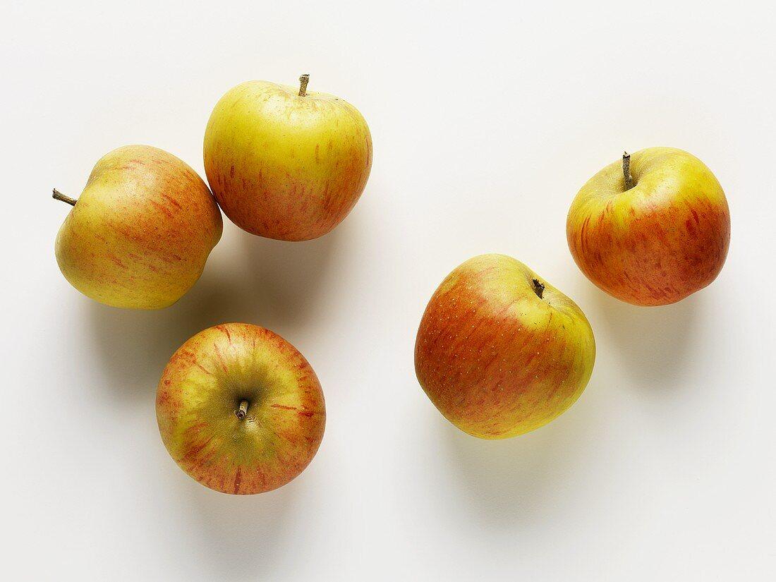 Apples (variety: Gold Pearmain)