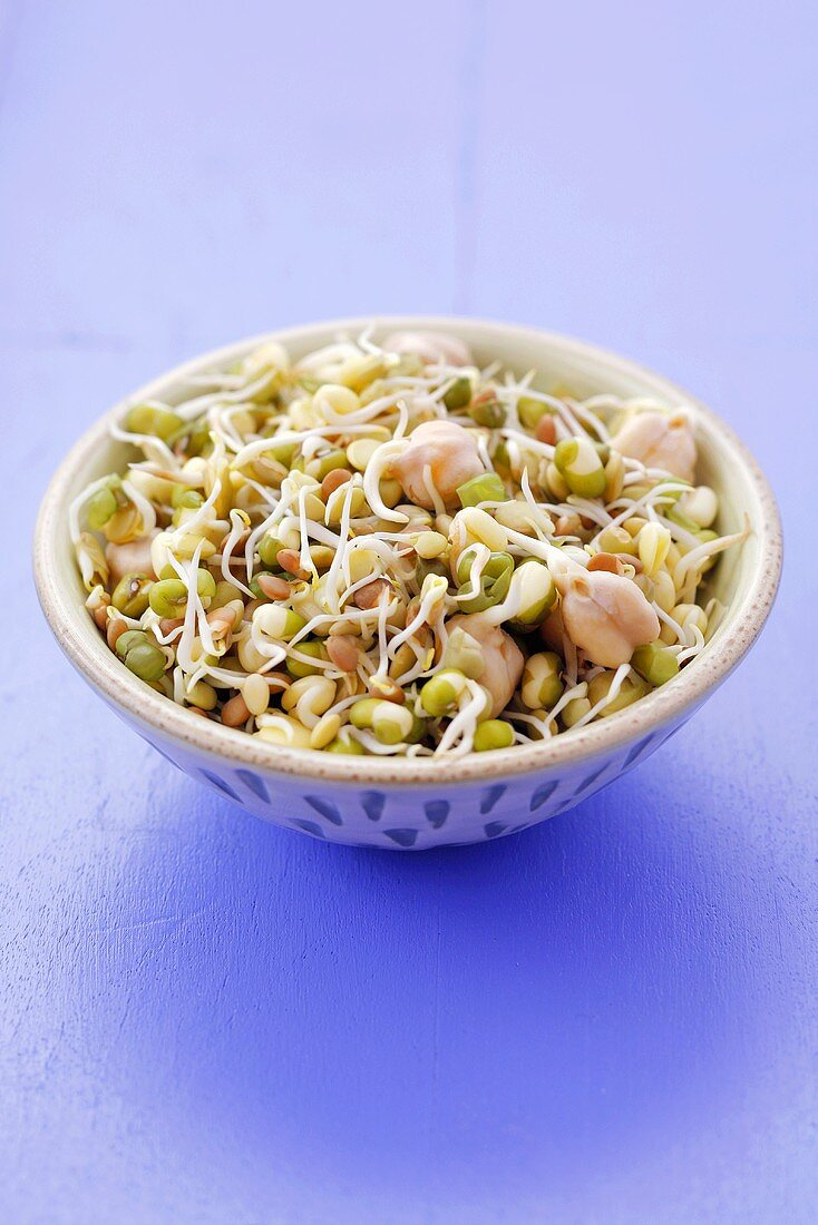 Lentil, chick-pea and mung bean sprouts