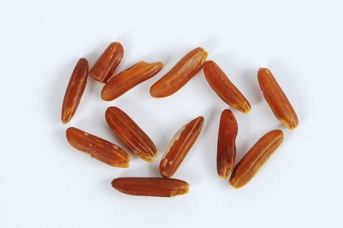 Grains of whole-grain red rice (Oryza sativa)