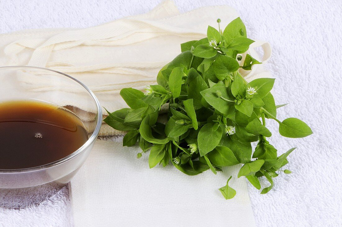 Fresh chickweed and tincture for poultices and compresses