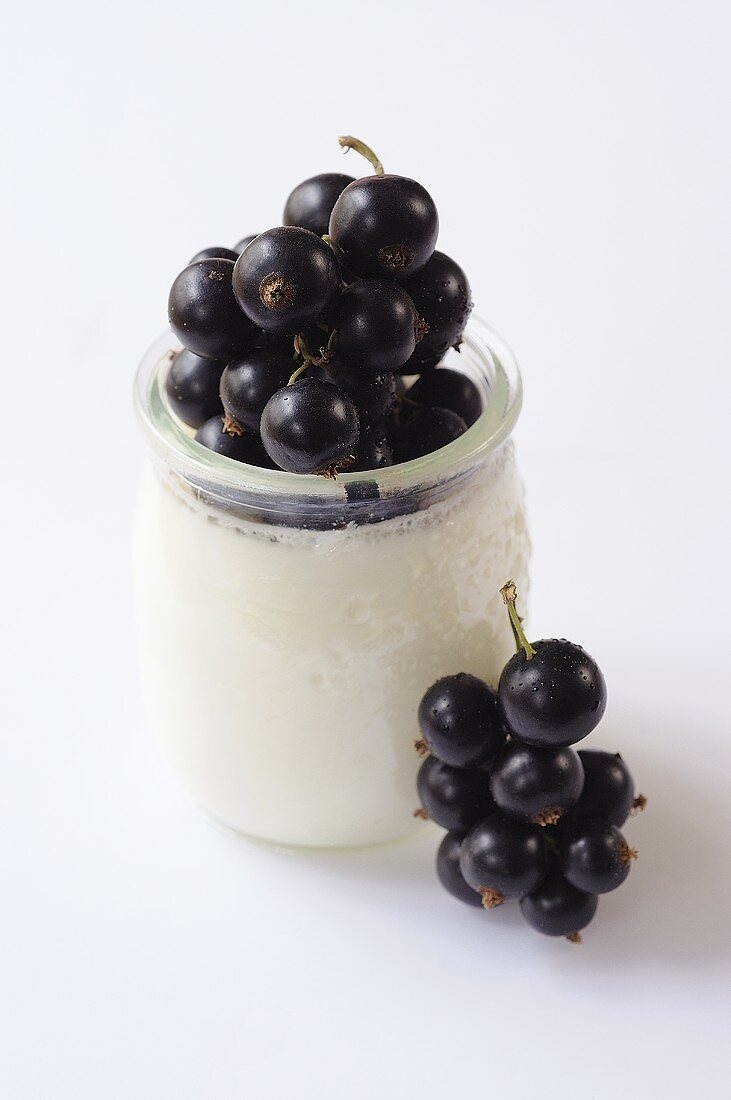Natural yoghurt with blackcurrants