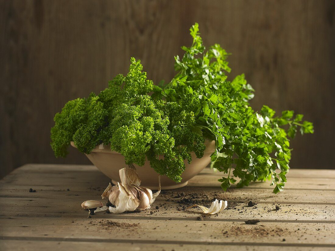 Curly and flat-leaf parsley in clay bowl, garlic and soil