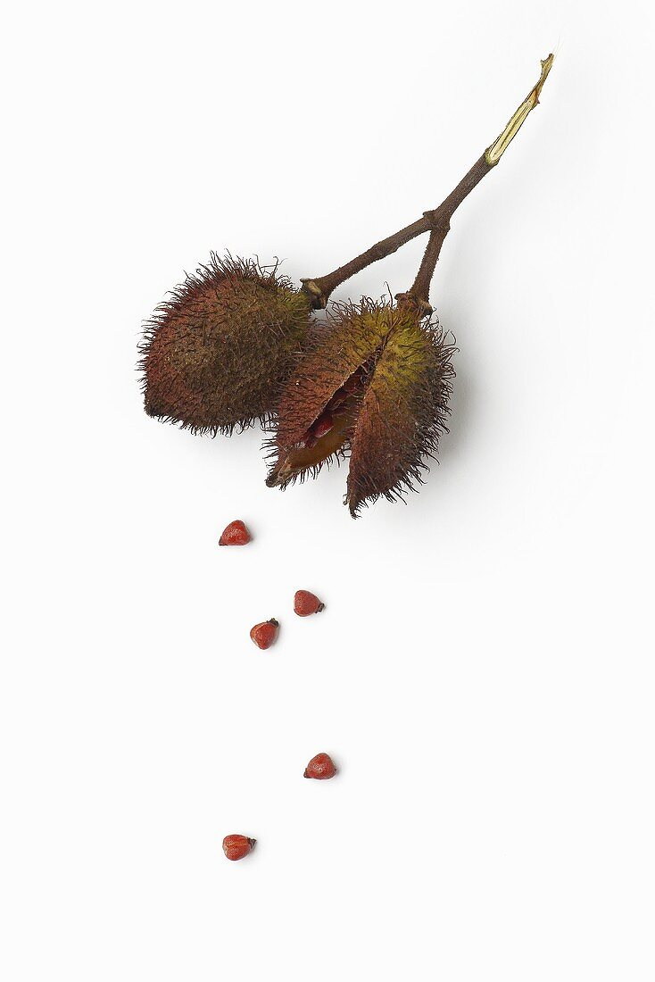 Achiote fruits and seeds (Bixa orellana)