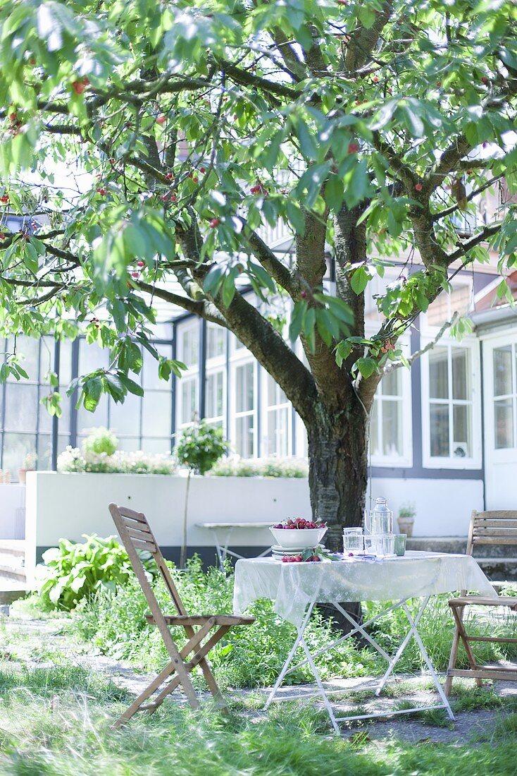 Fresh cherries on a garden table under a cherry tree