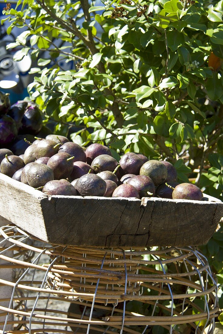 Freshly harvested passion fruits