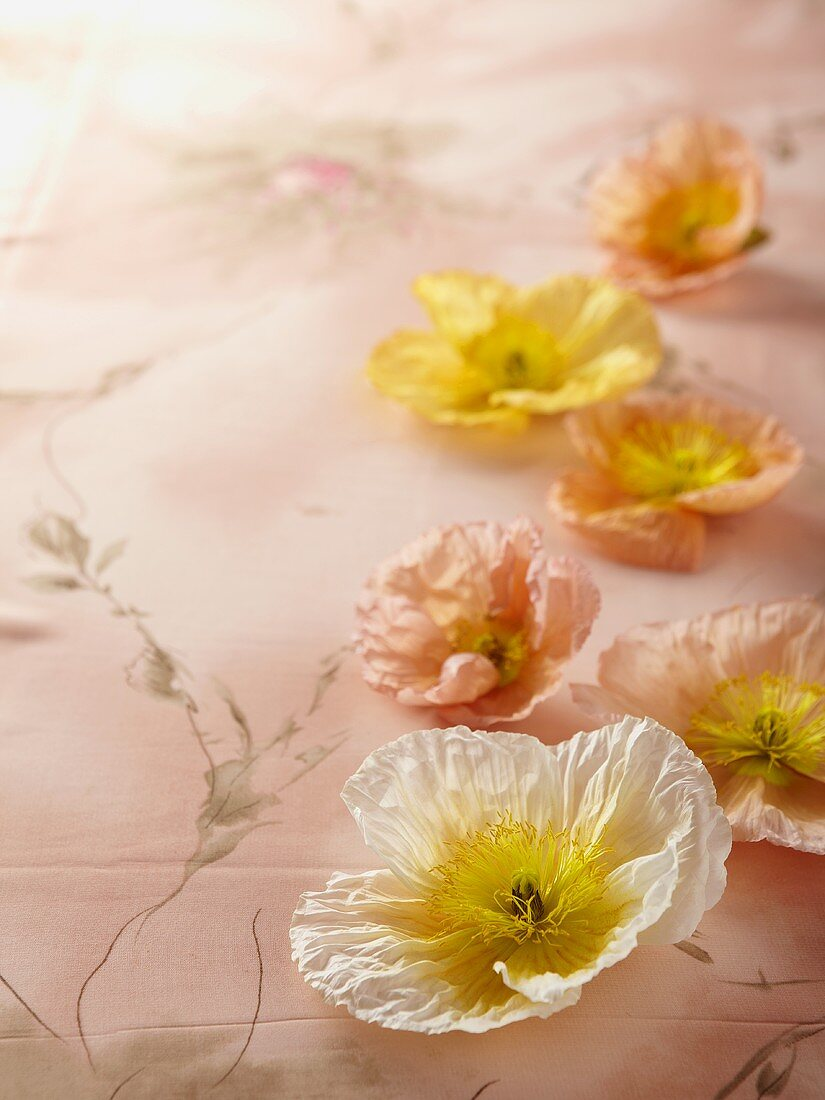 Poppies on a floral patterned cloth