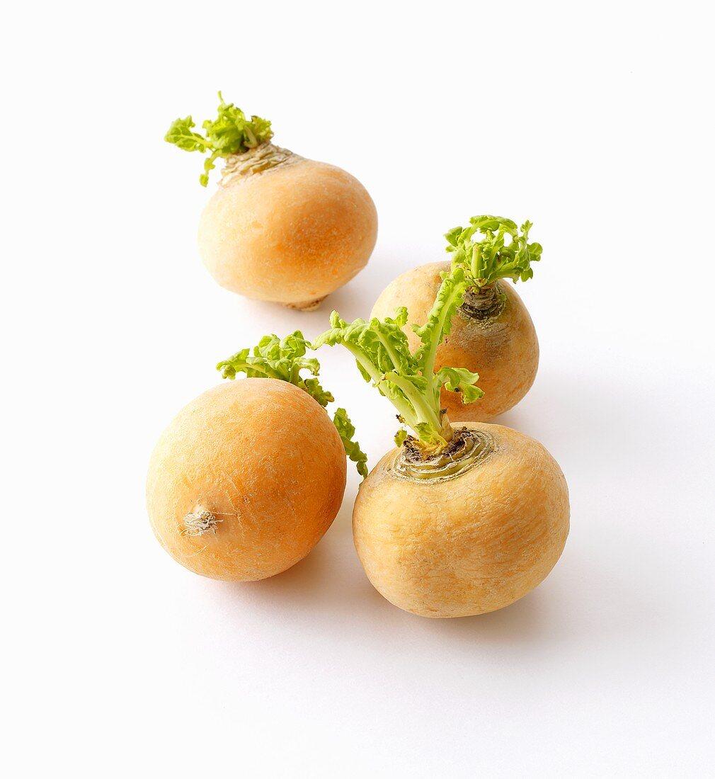 Boule d'Or turnips