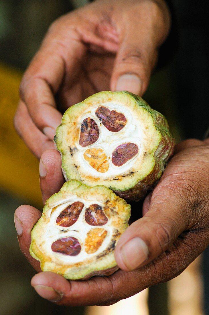 Cacao fruit, Sri Lanka