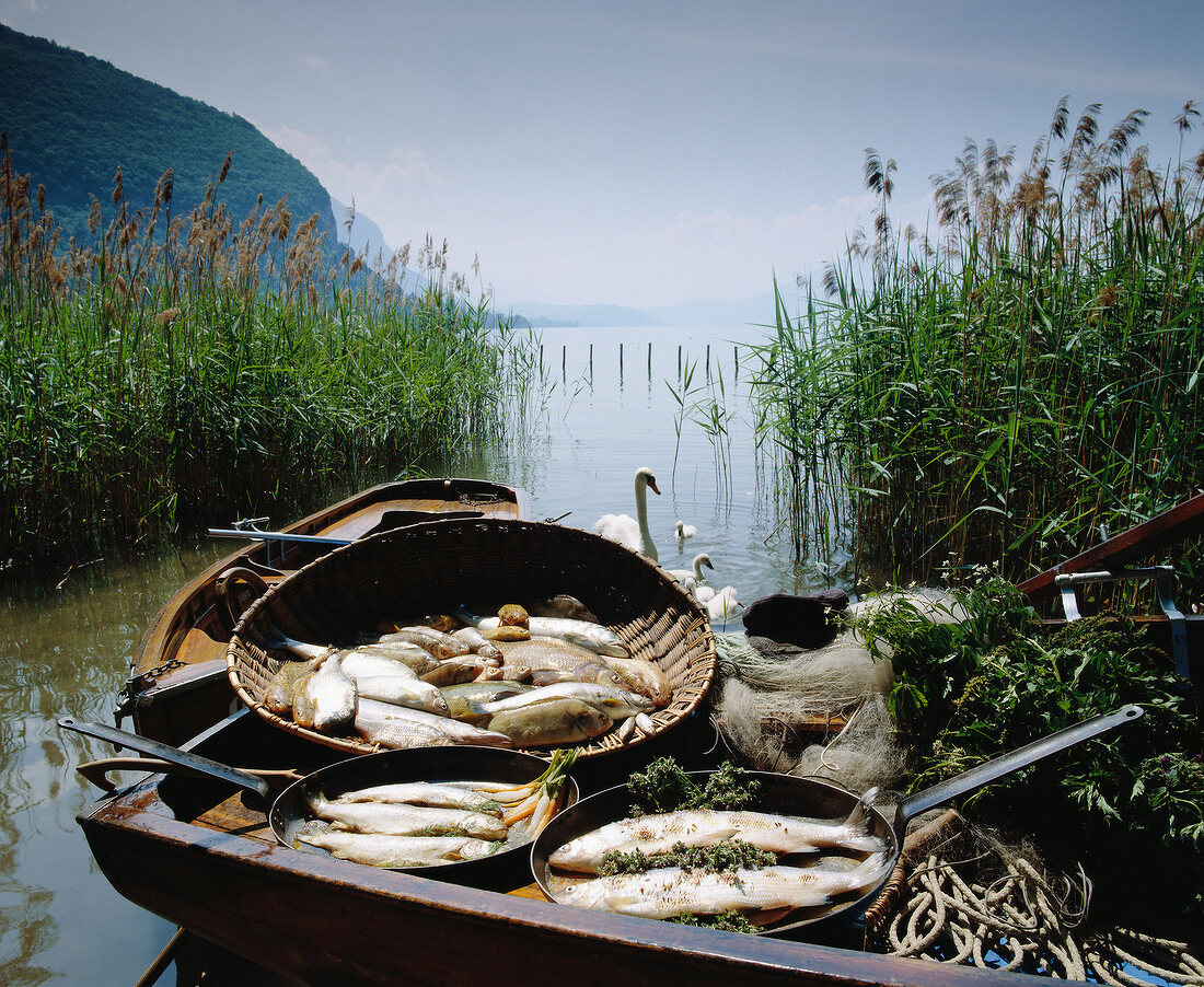 Fish in basket by river