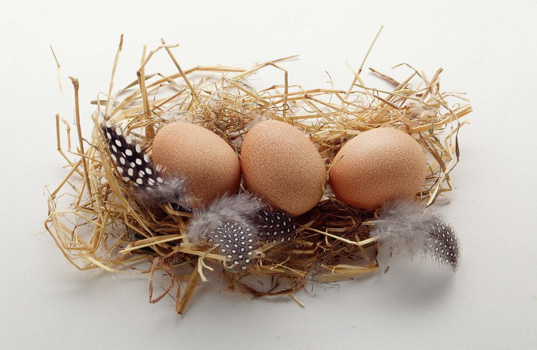 Guinea-fowl eggs