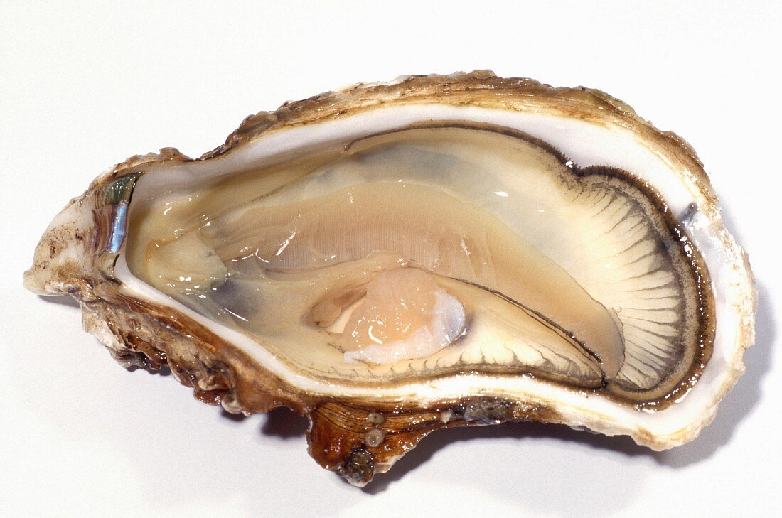 Oyster from Bouzigues