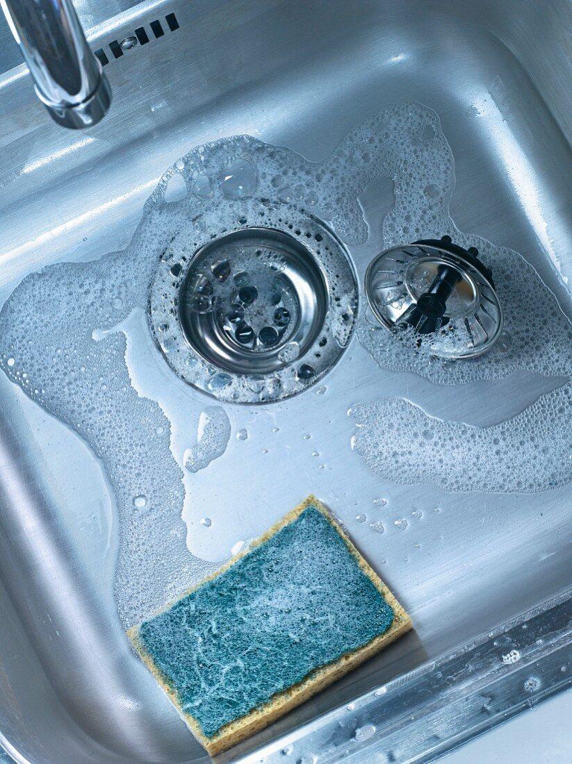 Sponge in the sink