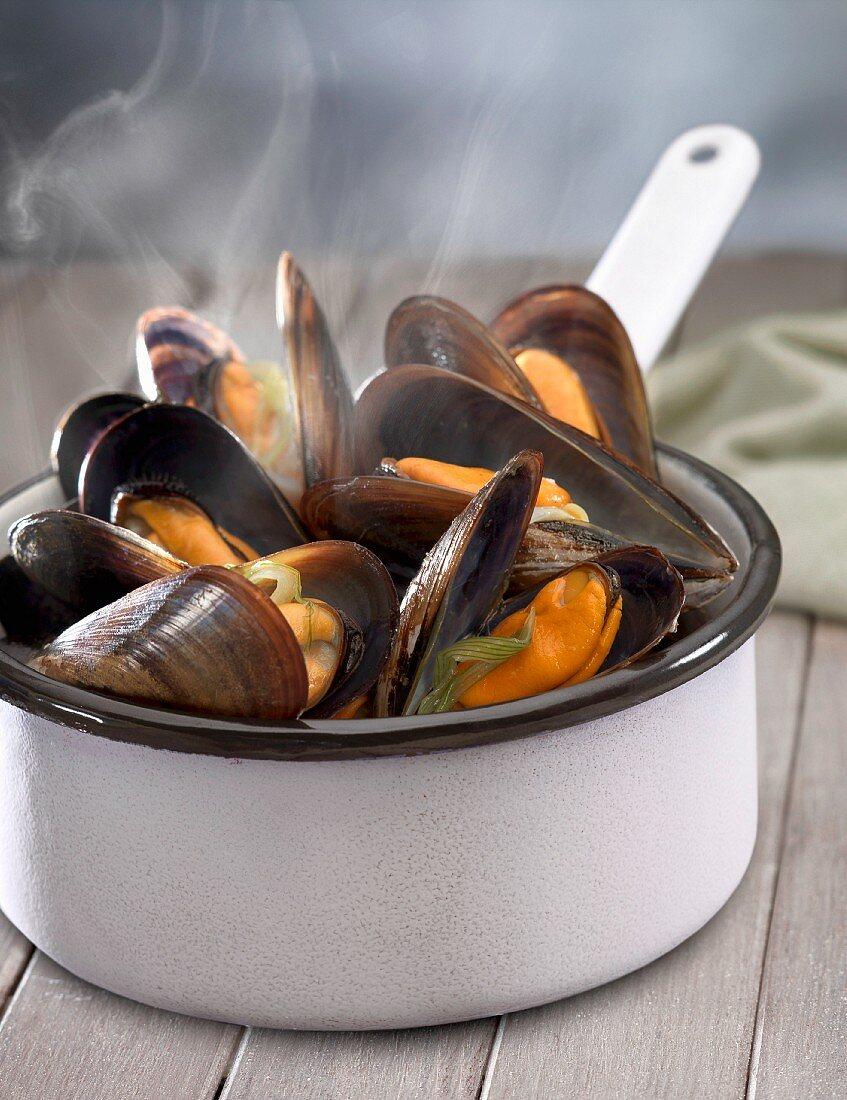 Saucepan of steaming hot mussels