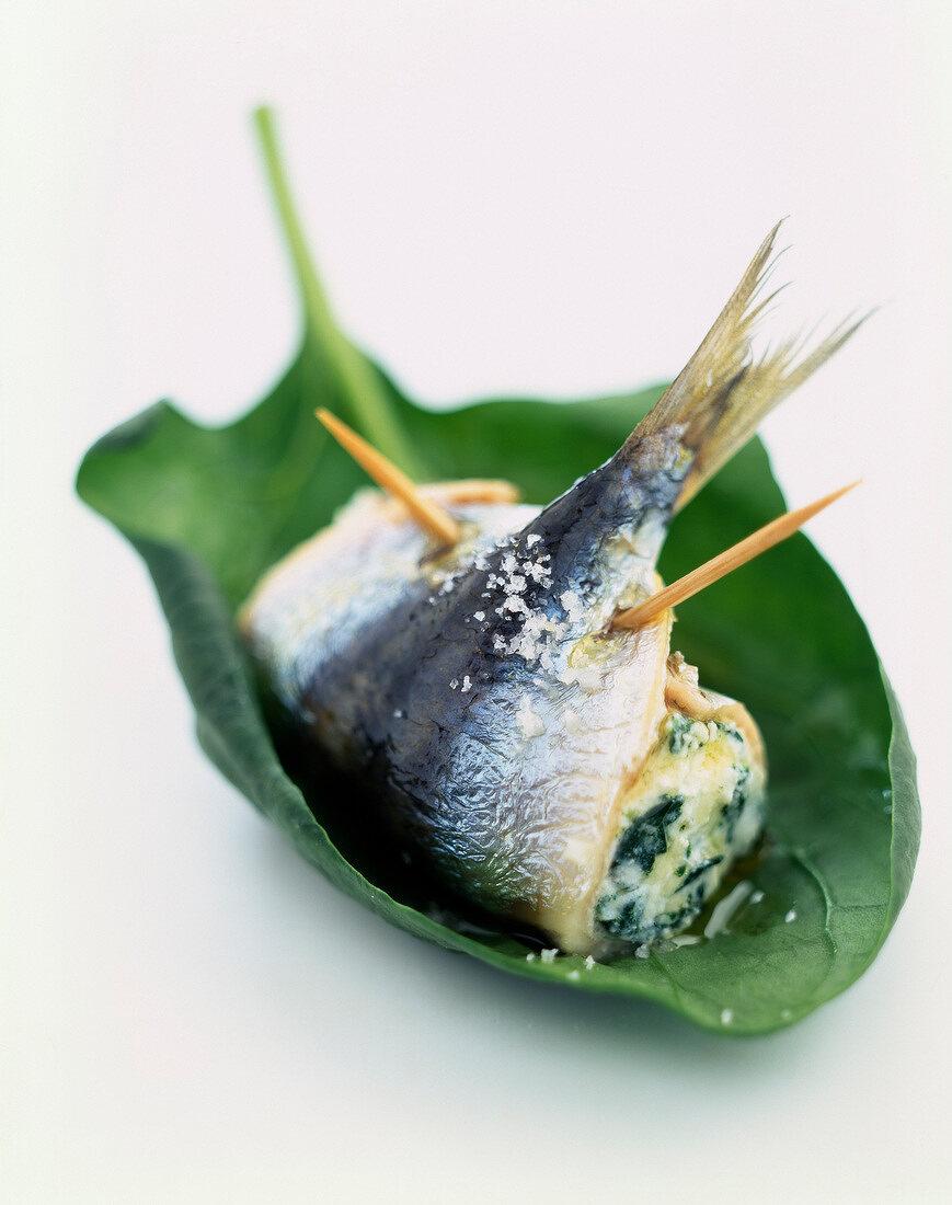 Rolled sardine stuffed with Brocciu