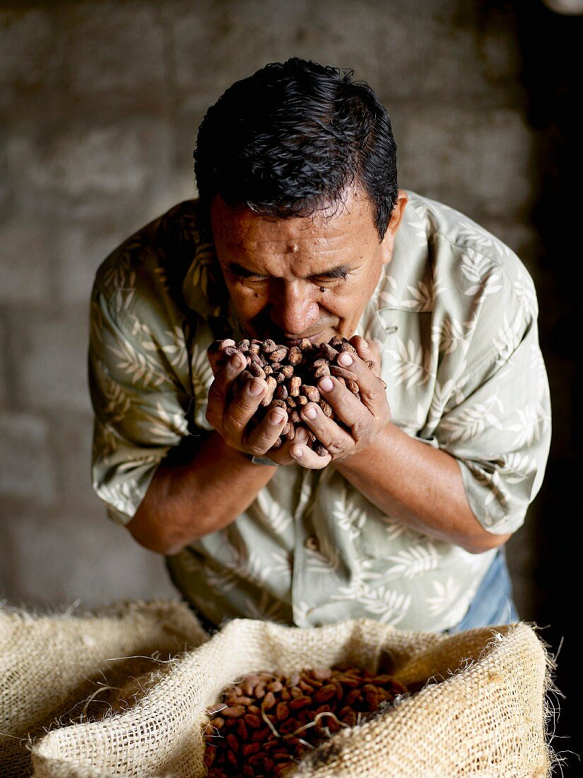 Agricultural engineer testing the quality of the cocoa beans