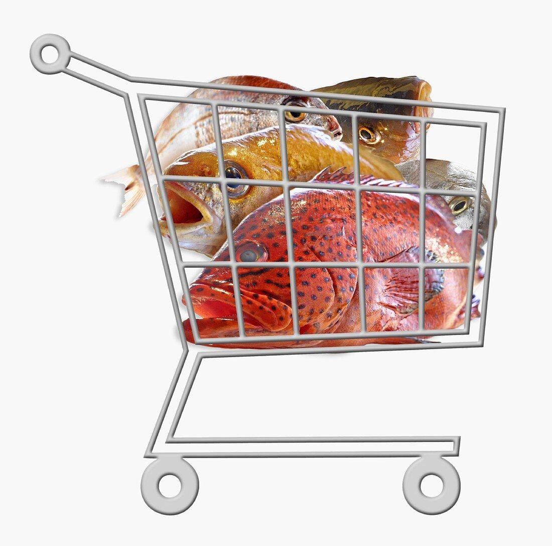 Mini supermarket trolley full of fresh raw fish