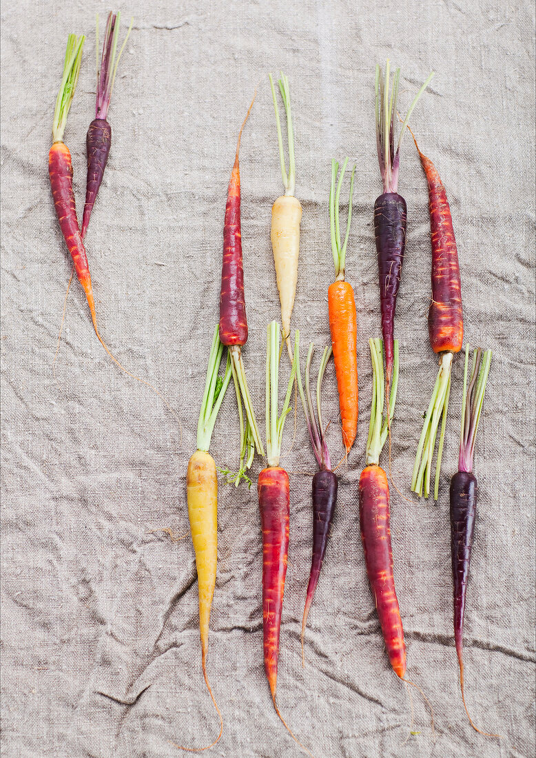 Composition with carrots