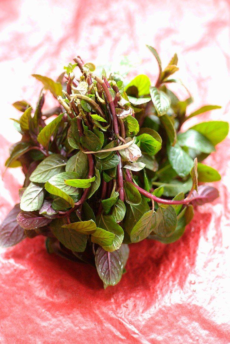 Bunch of wild herbs