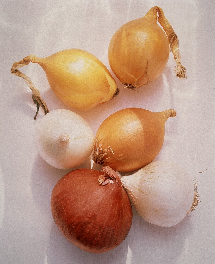 Assorted Types of Onions