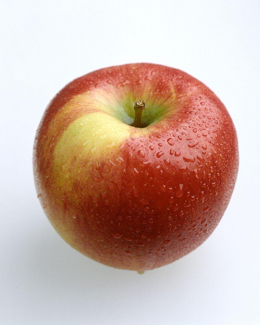 Washed Jonagold Apple